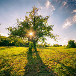 Stromy a ich podoby