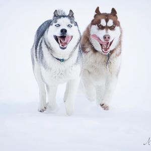 Milujeme zimu :D