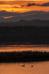 Večerné Labutie jazero