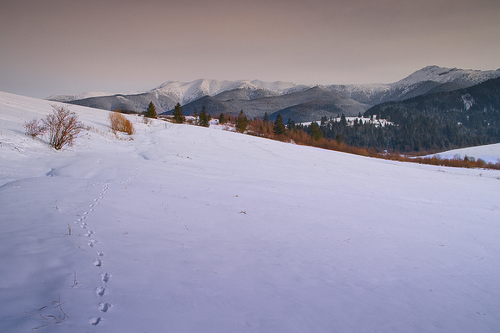 2008_02_17