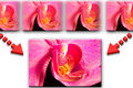 Ostré makro fotky s TimeLapse sliderom (Focus Stacking) (by ISD)
