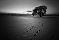 osamelý stopár