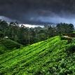 krajina čaju a dažďa III.