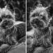 Pán pes pred objektívom (HUGO)