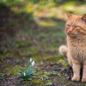 Garfield ...