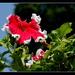 kvet 5