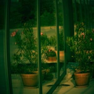 Kvety v odraze.