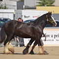 National Exhibition Horse 2013 S