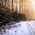 Tajomný les v Malých Karpatoch IV