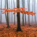 Tajomný les v Malých Karpatoch II