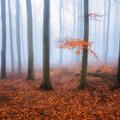 Tajomný les v Malých Karpatoch III
