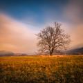 Strom za Sološnicou