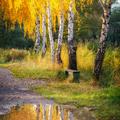 Jeseň na rašeline Rohožník II