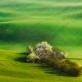 Na zelených poliach