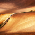 Zlaté vlny