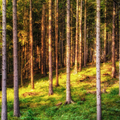 Les v Gaderskej doline