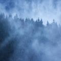 Lesné hmly