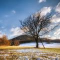 Vývrat Malé Karpaty