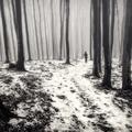 Tajomný les v Malých Karpatoch V