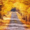 Jesennou cestou na Vývrat