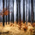 Tajomný les v Malých Karpatoch I