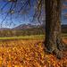 Zlatá jeseň...