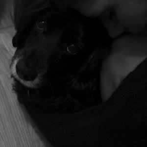 Pes a jeho...