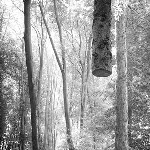 levitujúci strom