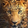 animals_15