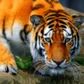 animals_20