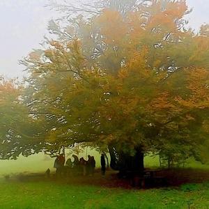 pod stromom
