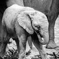slonik01NA FB