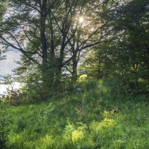 Pod stromami