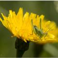 2015_0531_0175s_grasshopper