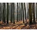 Decembrový les v jesennom šate