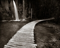 brána do tajomného lesa...