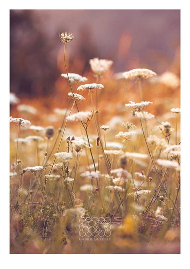 Kvety-na-lúke