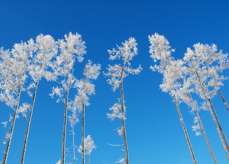 Zasnežené stromy -tatry
