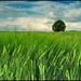 Zelené pole