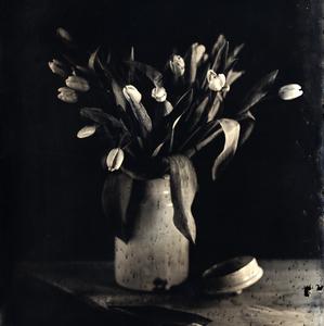 The tulips #2