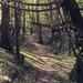 Cestička do zakazaneho lesa