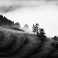 Foggy oktober morning