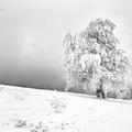 Zimná nálada