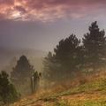 Hmlisté ráno v lese