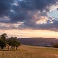 Augustový západ slnka v aleji