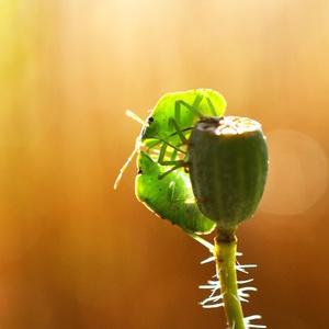 zelená láska