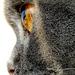 kočka z profilu