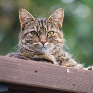Mačacinka na strieške