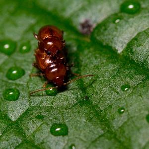 Láska chrobáčikov