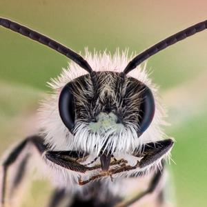 Včielka ...